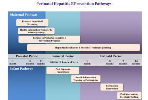 Perinatal HBV Prevention Pathway FINAL 12-21-15