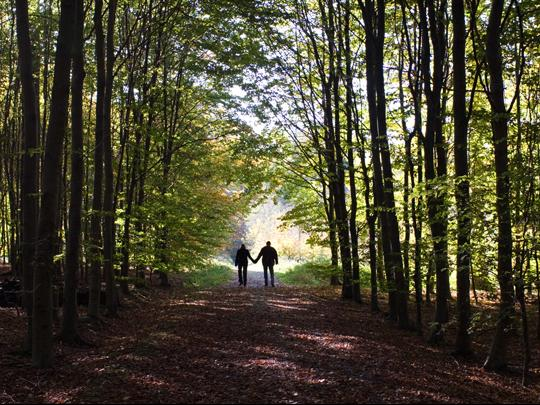 Two people walk hand in hand down a leaf strewn path. Photo credit: FrankyDeMeyer